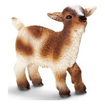 Карликовый козёл, детёныш