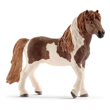 Исландский пони, жеребец