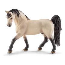 Теннесийская лошадь, жеребец