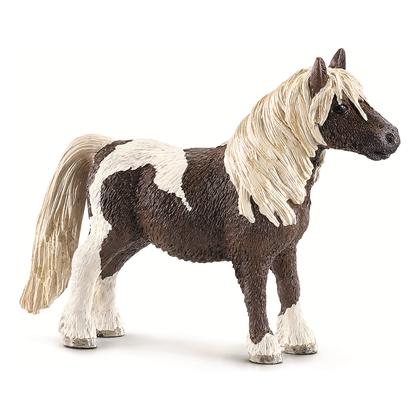 Шетлендский пони, жеребец