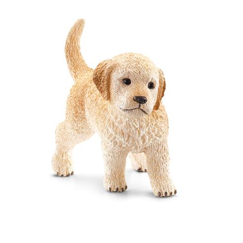 Золотистый ретривер, щенок