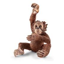 Орангутан, детёныш