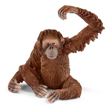 Орангутан, самка