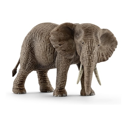 Африканский слон, самка