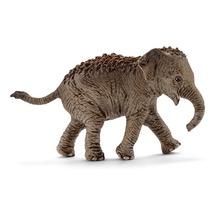 Азиатский слон, детёныш