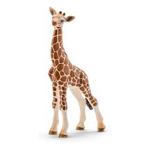 Жираф, детёныш