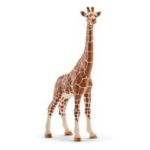 Жираф, самка
