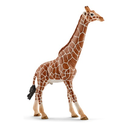 Жираф, самец