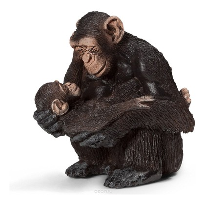 Шимпанзе, самка с детёнышем