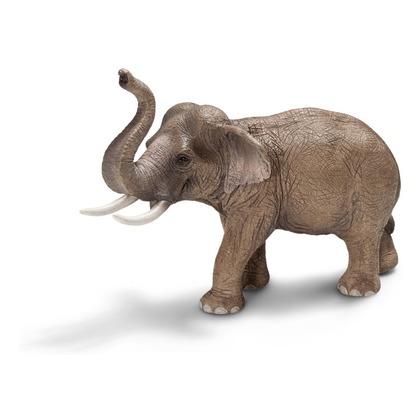 Азиатский слон, самец