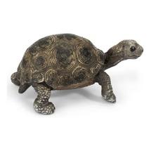 Гигантская черепаха, детёныш