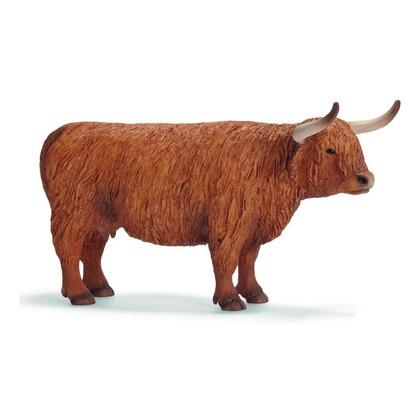 Северо-шотландская корова
