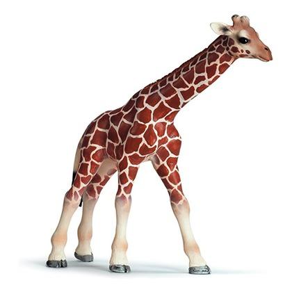 Малыш жирафа
