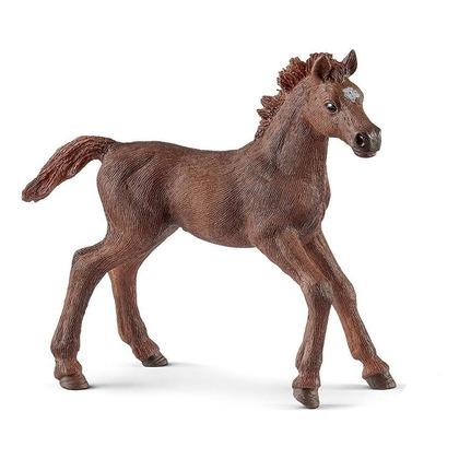 Чистокровная верховая лошадь, жеребенок