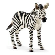Зебра, детеныш
