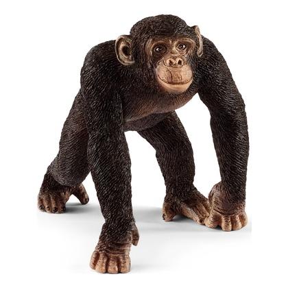 Шимпанзе, самец