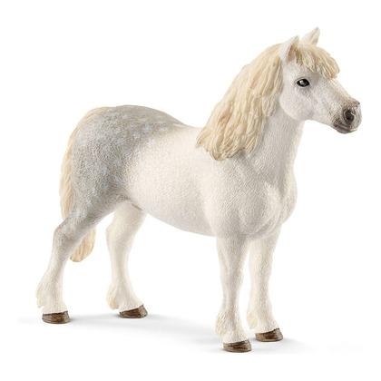 Уэльский пони, жеребец