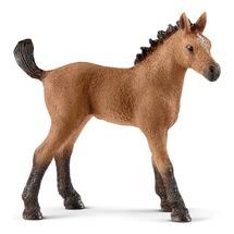 Американская верховая лошадь, жеребенок