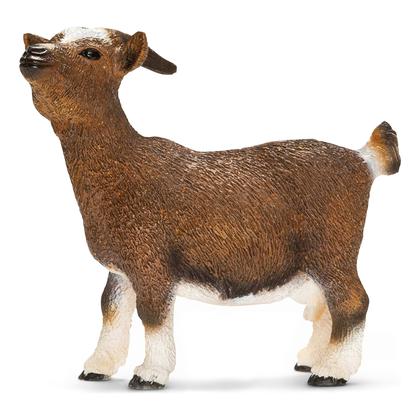Карликовый козёл